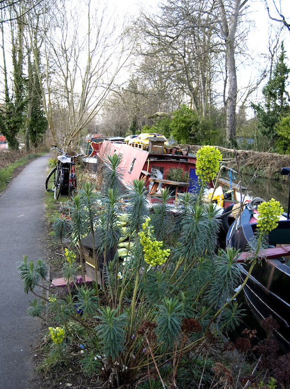 Oxford Canal Boats and Flowers